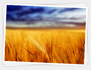 grains landscape